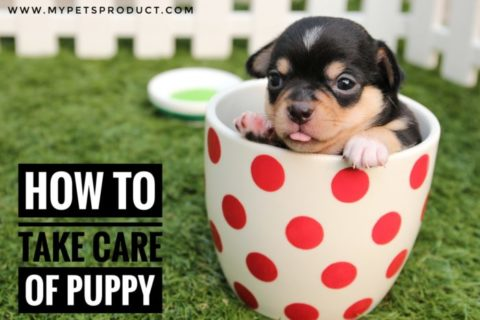 How to take care of the puppy