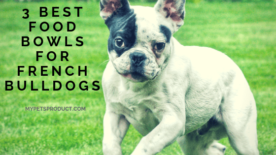 best dog bowls for french bulldogs