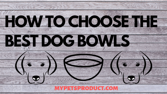 how to choose the best dog bowls