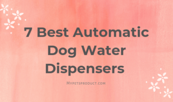 Automatic dog water bowl
