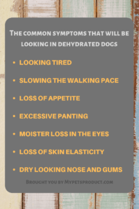 common symptoms that will be looking in dehydrated dogs
