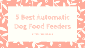 Automatic dog food feeder