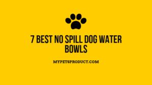 Best no spill dog water bowls