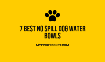 Best no spill dog water bowls