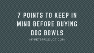 Points to keep in mind before buying dog bowls
