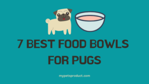 best food bowls for pugs