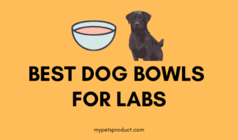 Best dog bowls for labs