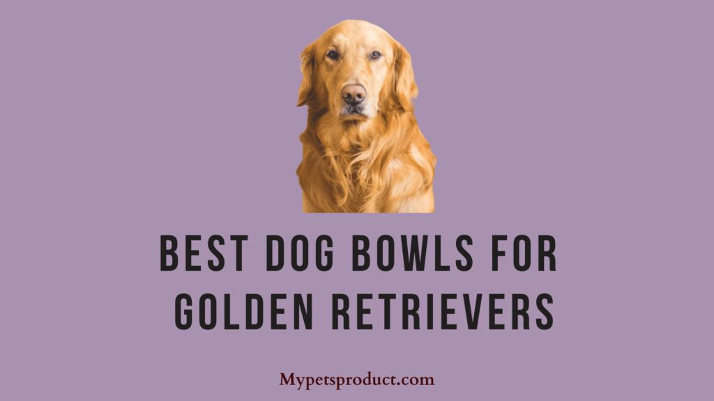best dog bowls for golden retrievers