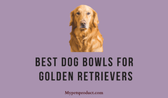 best dog bowls for golden retrievers
