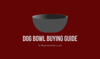 Dog bowl buying guide