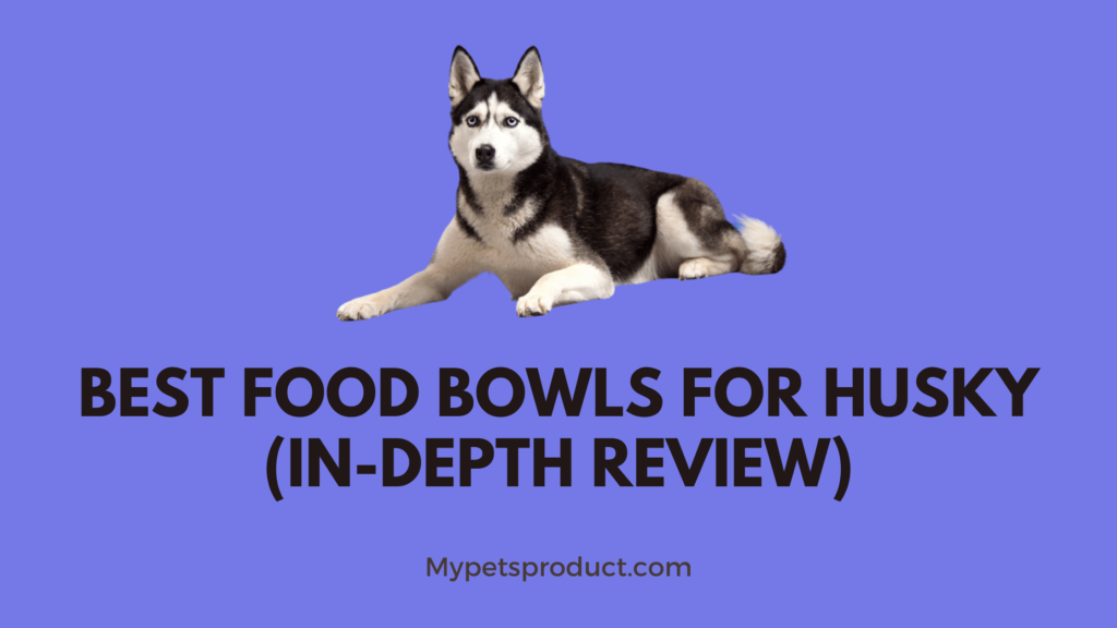 Best food bowls for husky