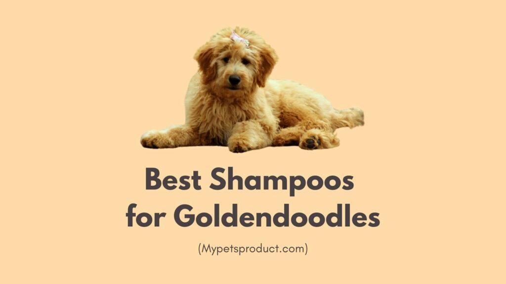 Best shampoos for Goldendoodles