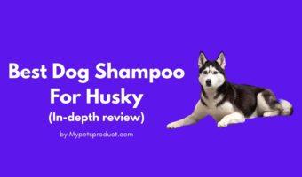 Best shampoo for husky