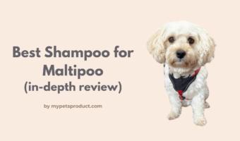 best shampoo for maltipoo