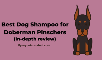 Best Shampoo for Doberman