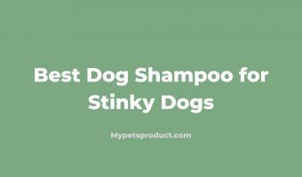 Best Shampoo for Stinky Dog