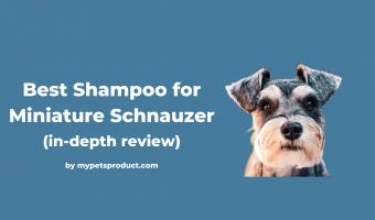 best shampoo for miniature schnauzer